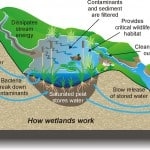 wetlands graphic