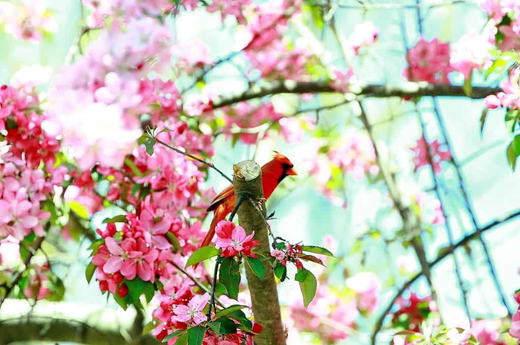 005_Cardinal_Doug_Pederson_zps4841db24