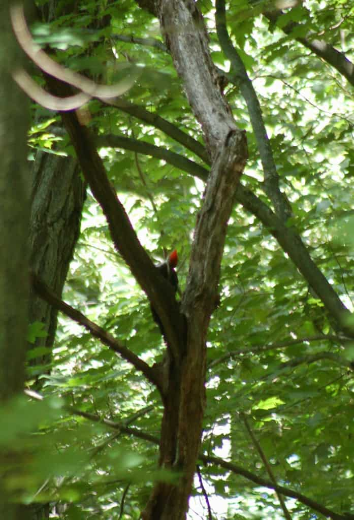 030_PIleated2-JoelTedford_zpsb23f12a5