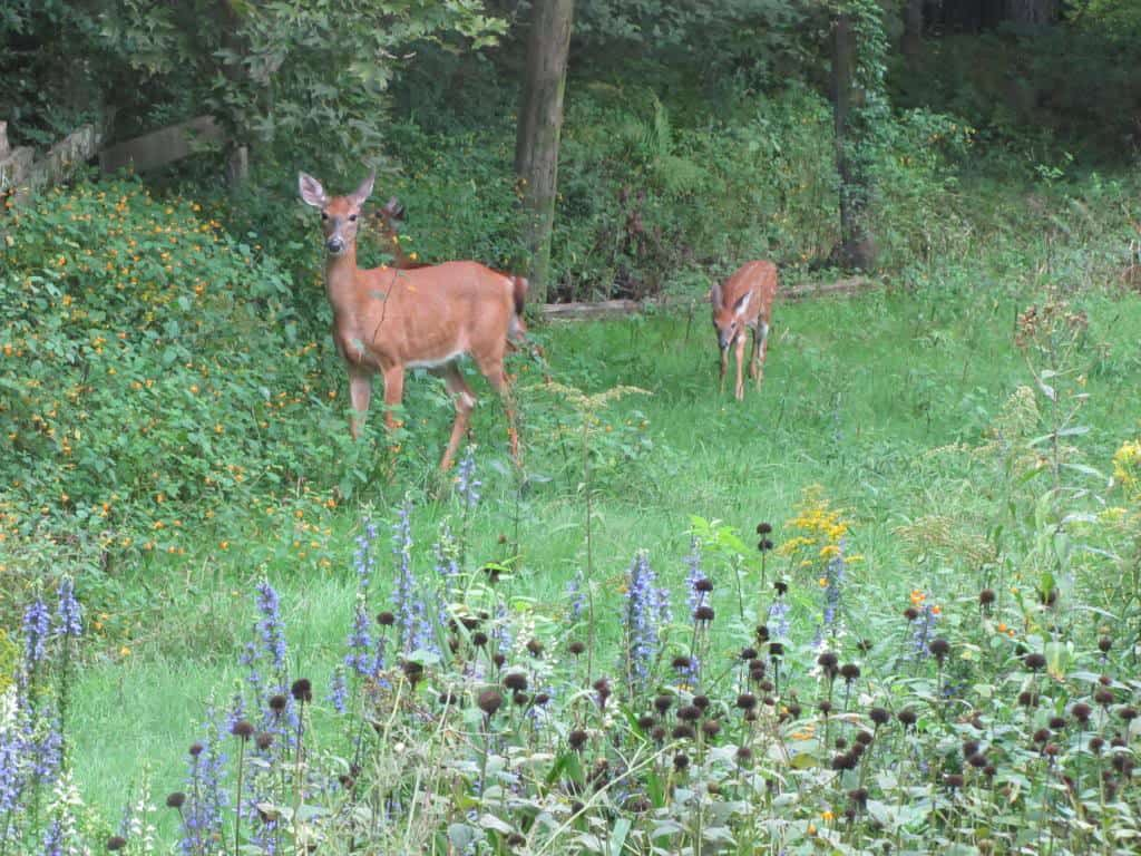 056_Deer_Dot_Mooney_zps895f83ee