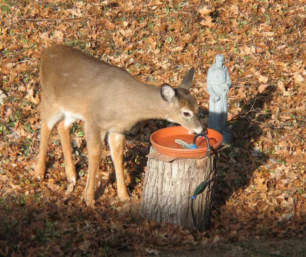 081_Bambi-In_the_Birdbath_BobPrice_zps4303a425