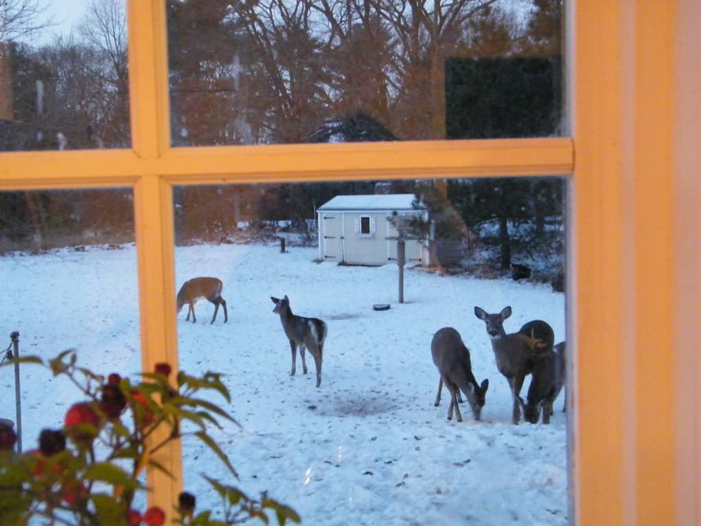 086_Deer2DebbiePrato