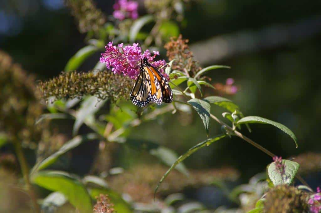 095_Monarch2-Diane_Duane_zps71677358