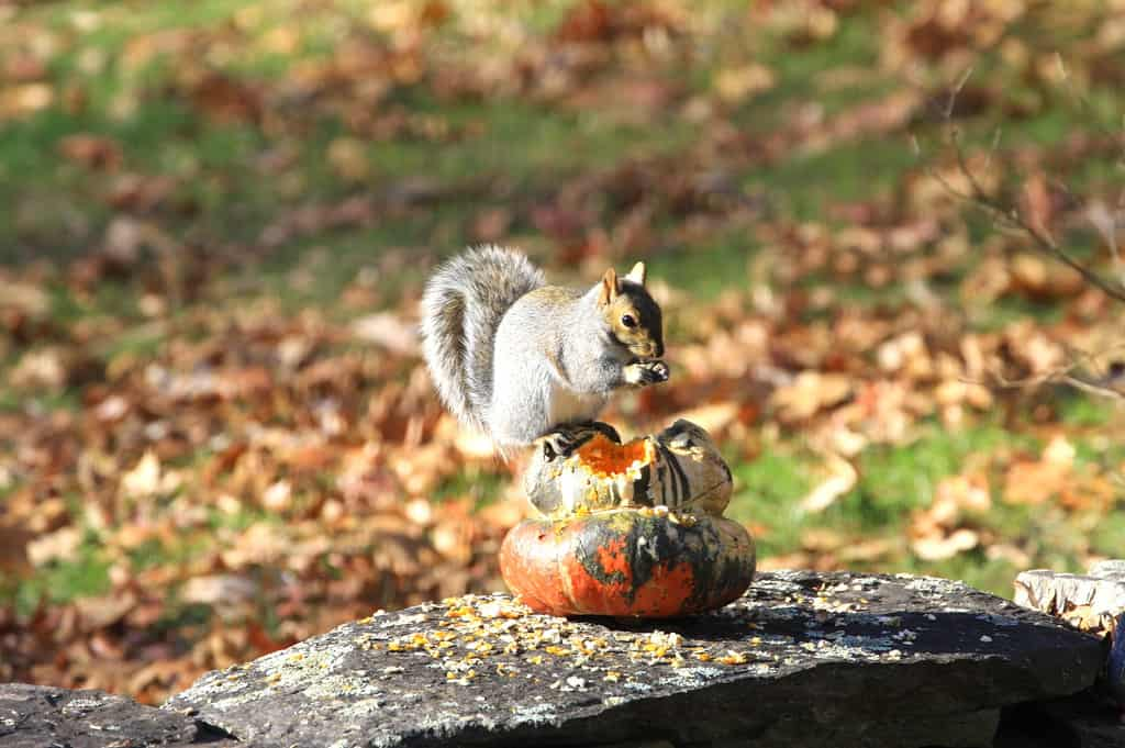 099_Squirrel2_DougPederson