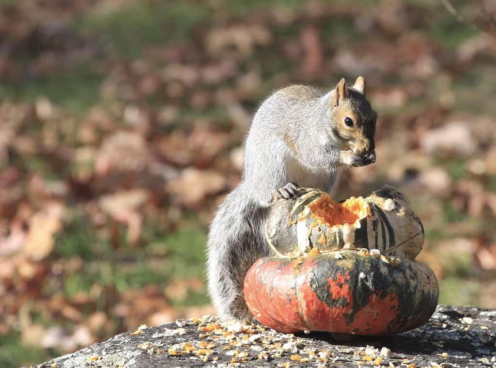 100_Squirrel3_DougPederson