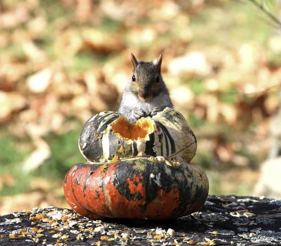 101_Squirrel_Doug_Pederson
