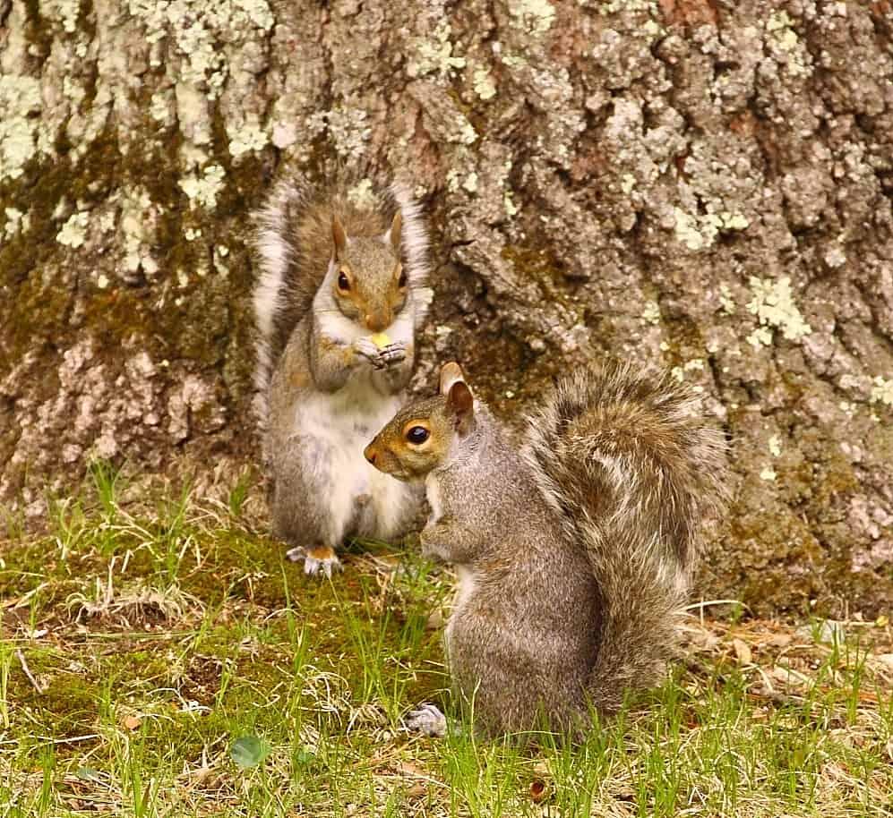102_twosquirrels3DougPederson