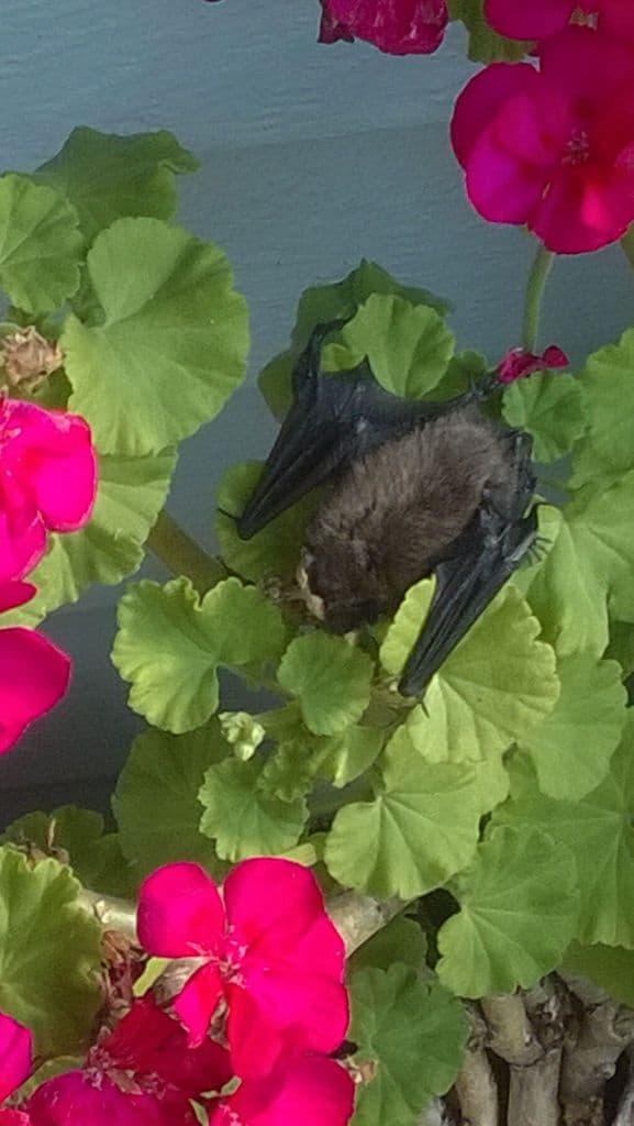 104_Bat_AngelaHarkness
