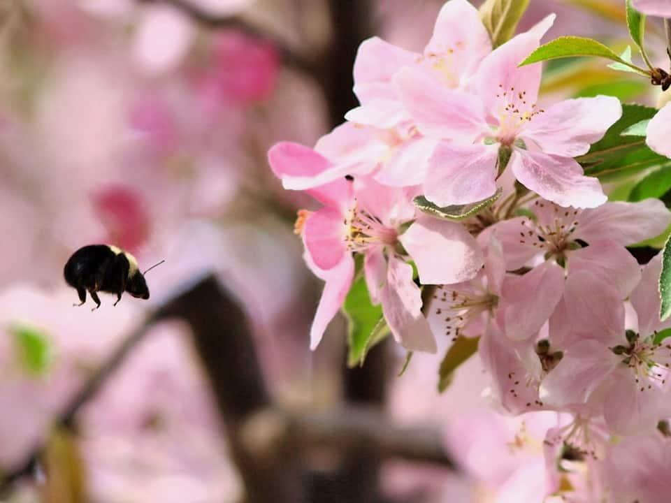 106_Bumblebee_Doug_Pederson_zpse04e2a84