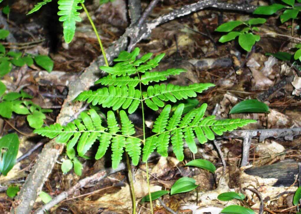 119_BrackenFern_Lisa_Groves_zps50c6014c
