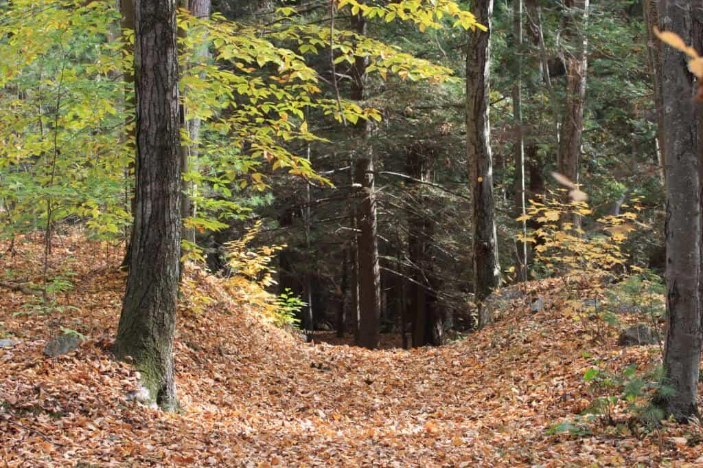 135_Forest_Trail_Doug_Pederson_zpsf4586700