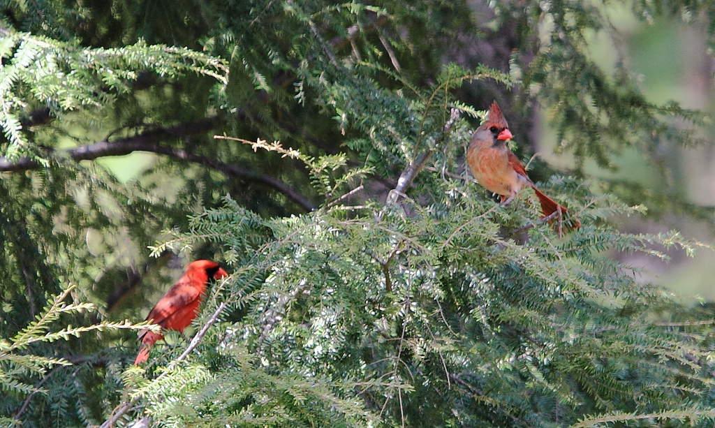 013_Cardinals_Doug-Pederson