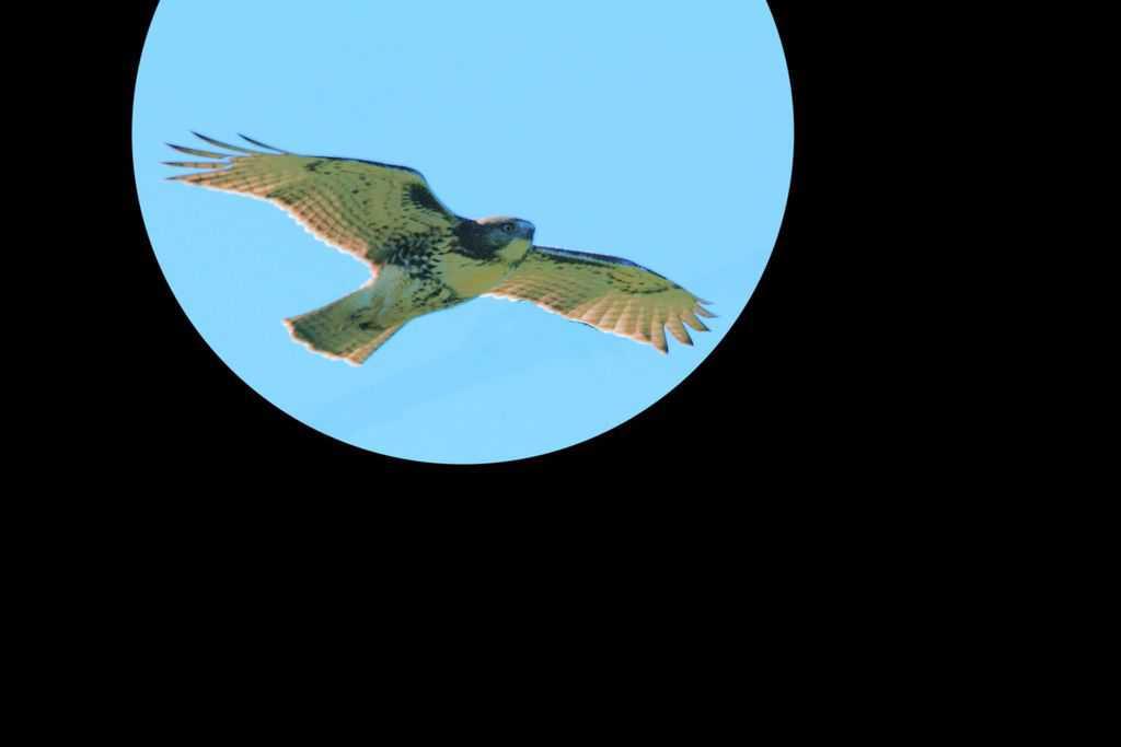 088_Osprey_Doug-Pederson
