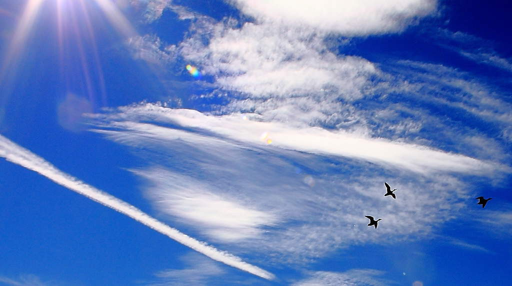 108_Geese-and-clouds_Doug-Pederson