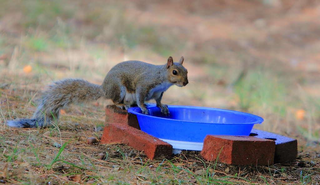 131_Squirrel-in-the-tub_Doug-Pederson