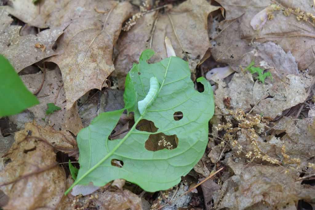 141_Caterpillar_Diane-Duane