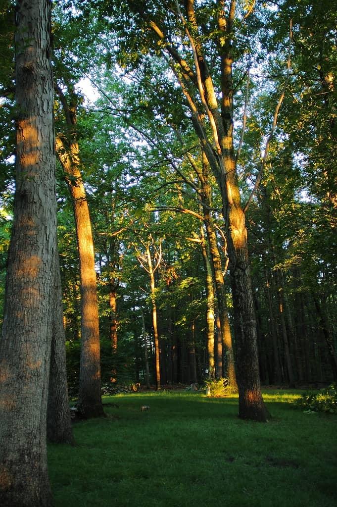 163b_Sunrise-in-my-yard_Doug-Pederson