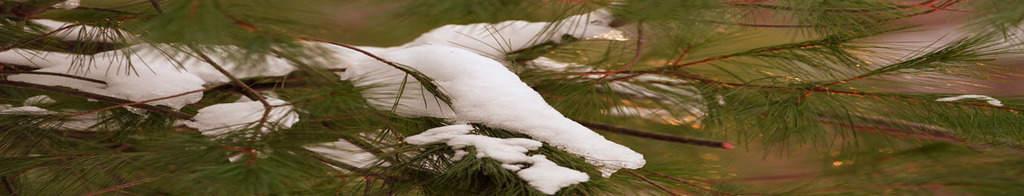 167_Snow-and-evergreen_Doug-Pedersonweb