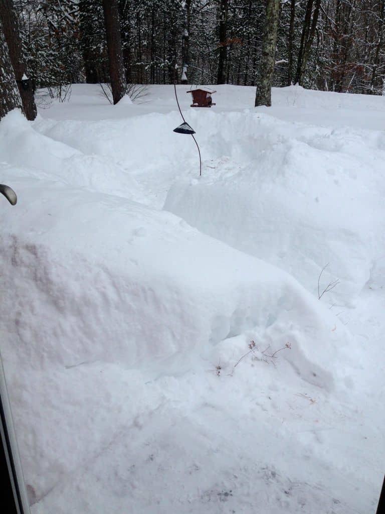 168_Snow-and-feeder_Cori-Ryan