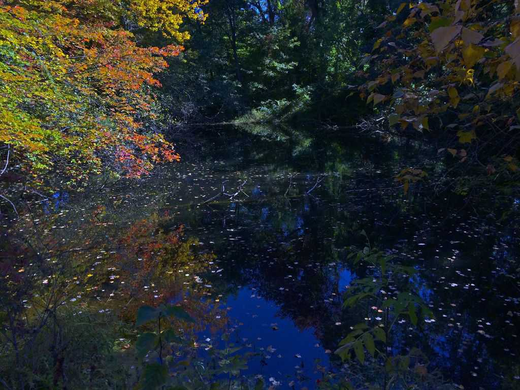 175b_Hunt-Rd.-Pond_Marian-Harman